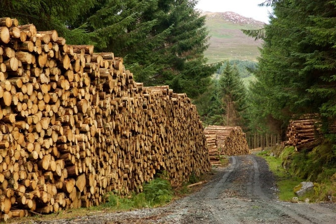 Teagasc Talking Timber