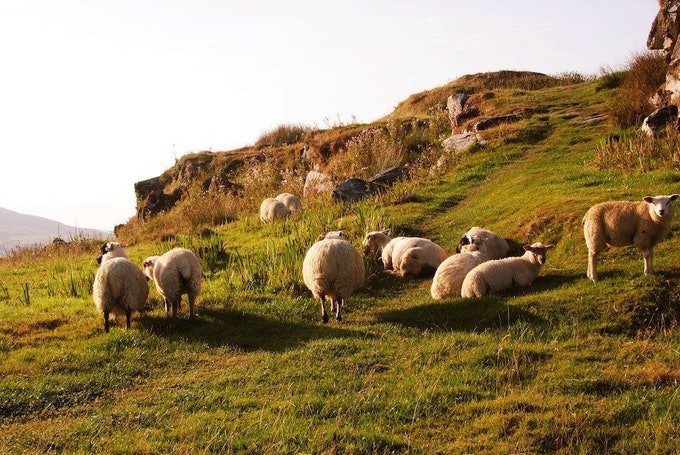 National Hill Sheep Conference