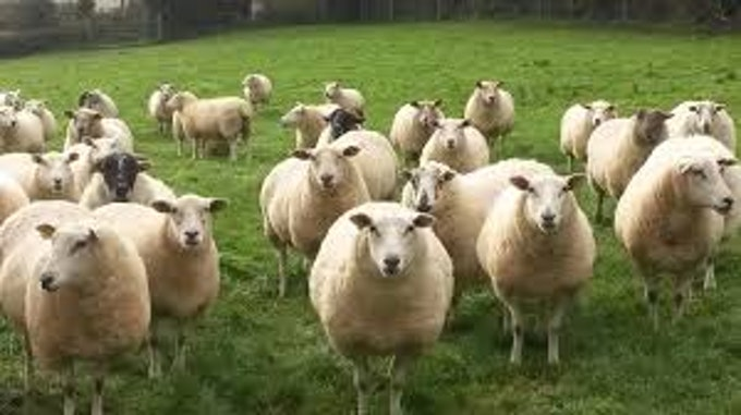 Teagasc Sheep Conference