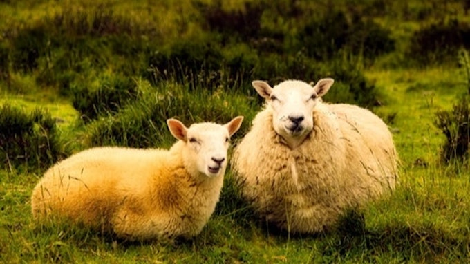 National Sheep Conference Kerry 2020