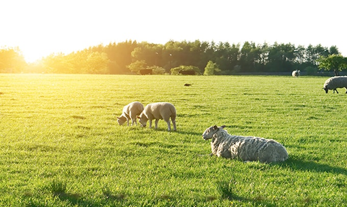 Targeted Agricultural Modernisation Scheme – TAMSII Closing Date Next Tranche 8th June.