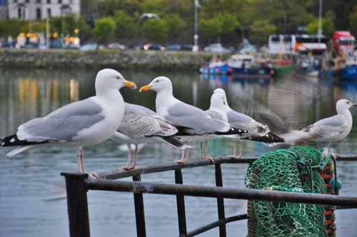 Seagull Information