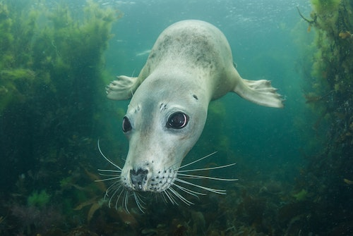 Dublin Bay Biosphere Marine photography Competition