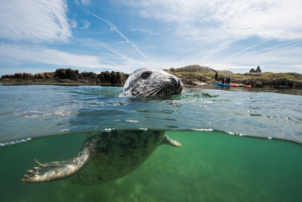 Dublin Bay Biosphere Underwater Photography Competition Winners Announced!