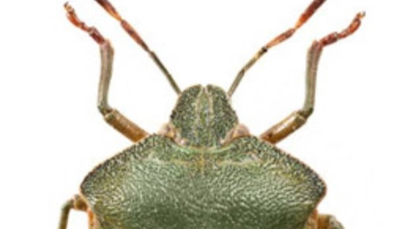 Identifying Ireland's shieldbugs and ladybirds