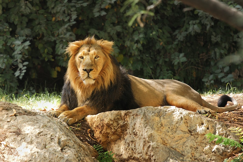 Shaw Gibbs join forces with Cancer Research UK to deliver a CPD seminar at London Zoo