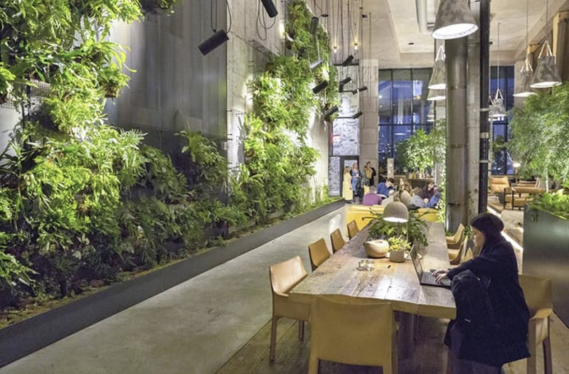 Open office space with plant life on large wall
